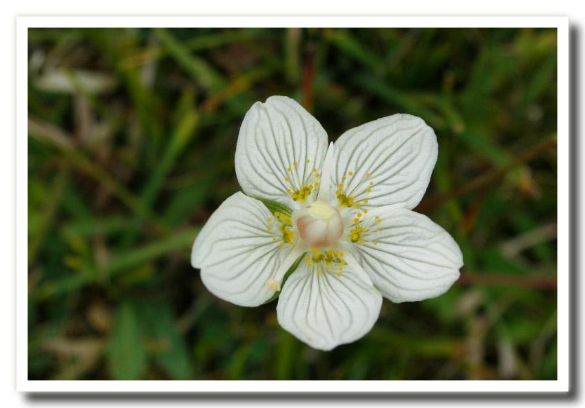 Fiori di primavera for Nomi di fiori bianchi