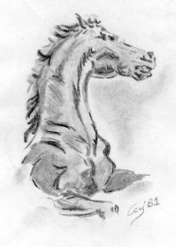 Huper m p i w s schizzi e disegni di max silva for Cavallo disegno a matita