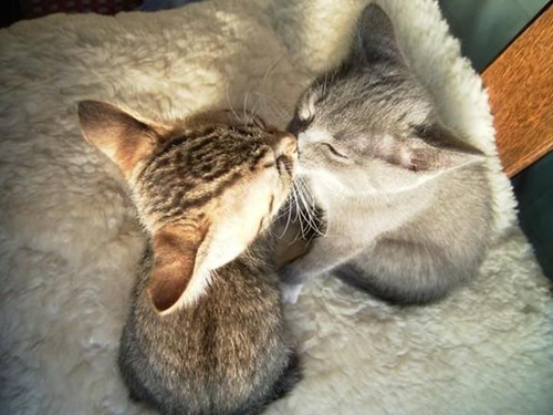 bacio micio!