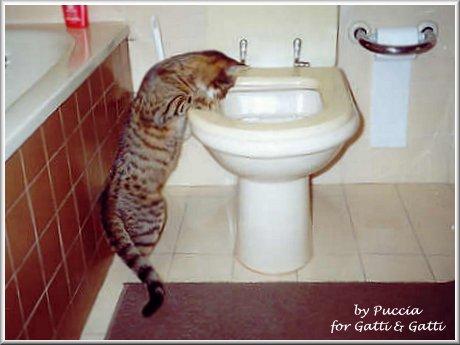 micio!!!! vai nella cassetta tua, mai che si può stare un po' in intimità, fila viaaa!!!  dans gatti Pallinacb