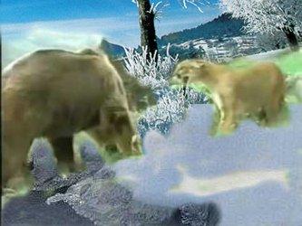 Ursus vs Pardus