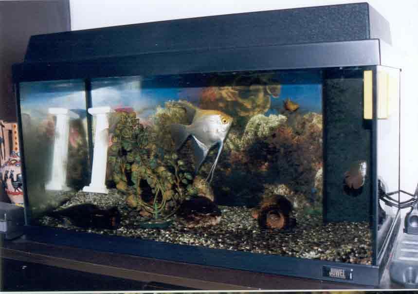 Il mio acquario for Arredamento acquario