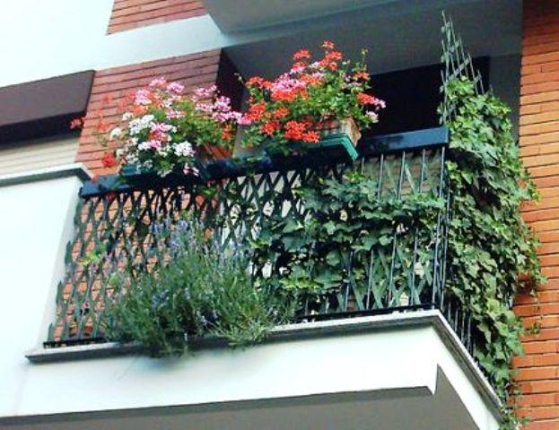 i miei prossimi balconi fioriti - Forum Giardinaggio