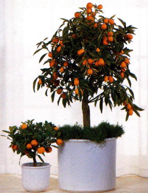 Piantine da interno piante appese alle pareti with for Ficus benjamin perde foglie