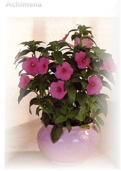 Piante fiorite da appartamento ispirazione interior - Piante fiorite ...