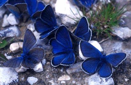 La farfalla su labyrinthe - Immagini di farfalle a colori ...