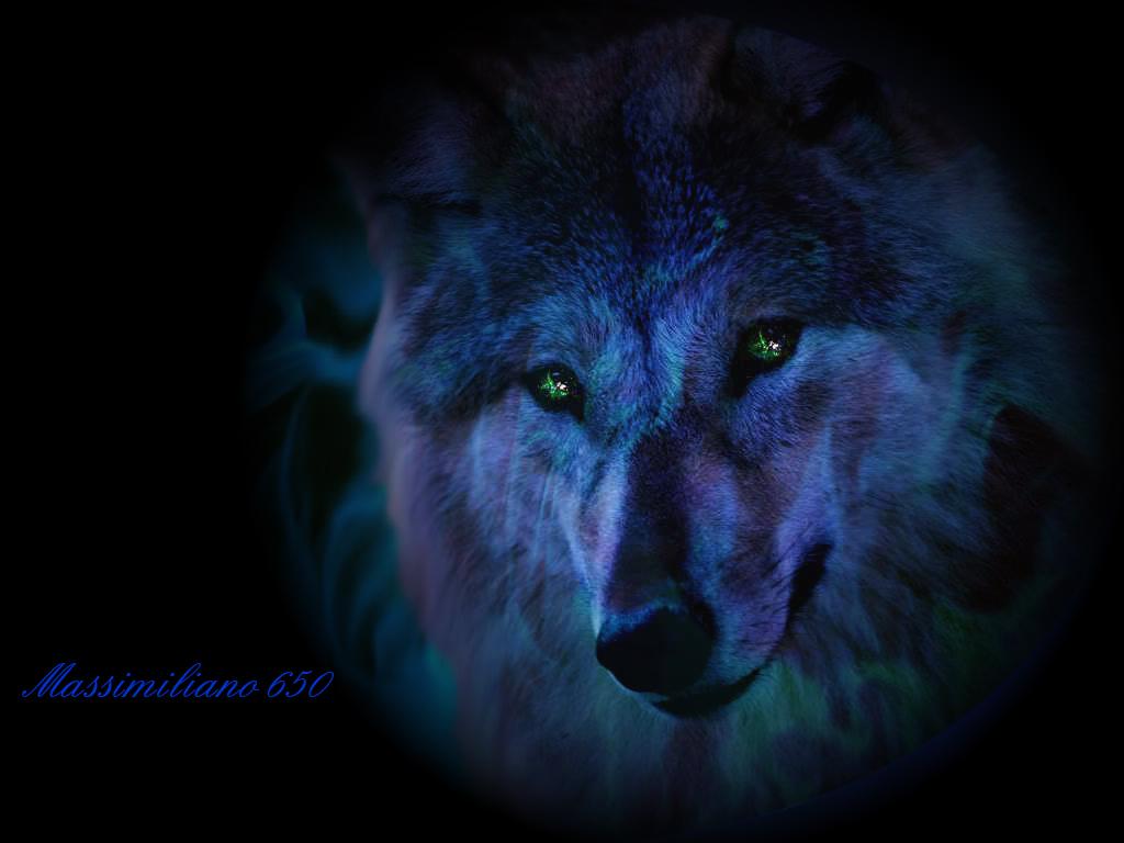Cool Wolf   Euro Palace Casino Blog