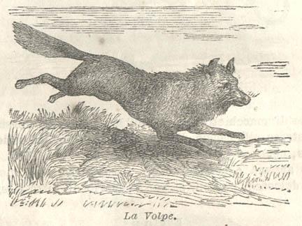 Canidi for Dove vive la volpe
