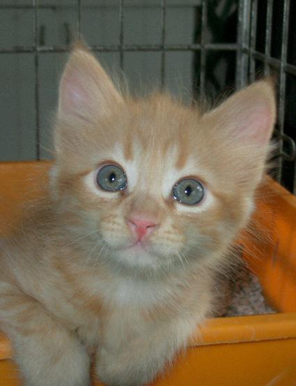 Gattino Rosso Con Gli Occhi Verdi Cerca Casa