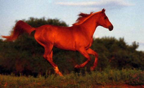 Grooming - Avere un cavallo ...