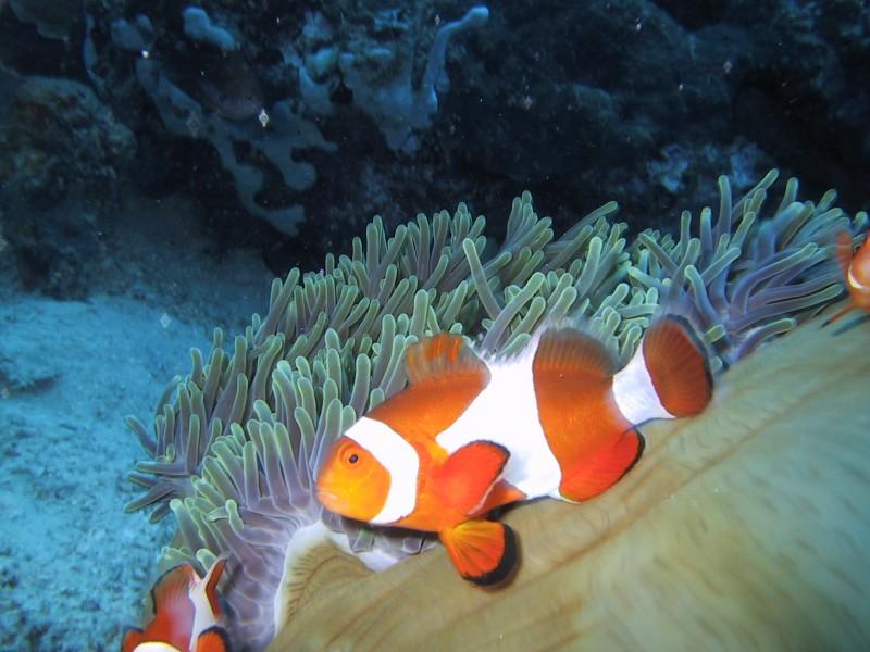 Paolo rossi sub curriculum hobby link lavoro cinema for Immagini pesce pagliaccio