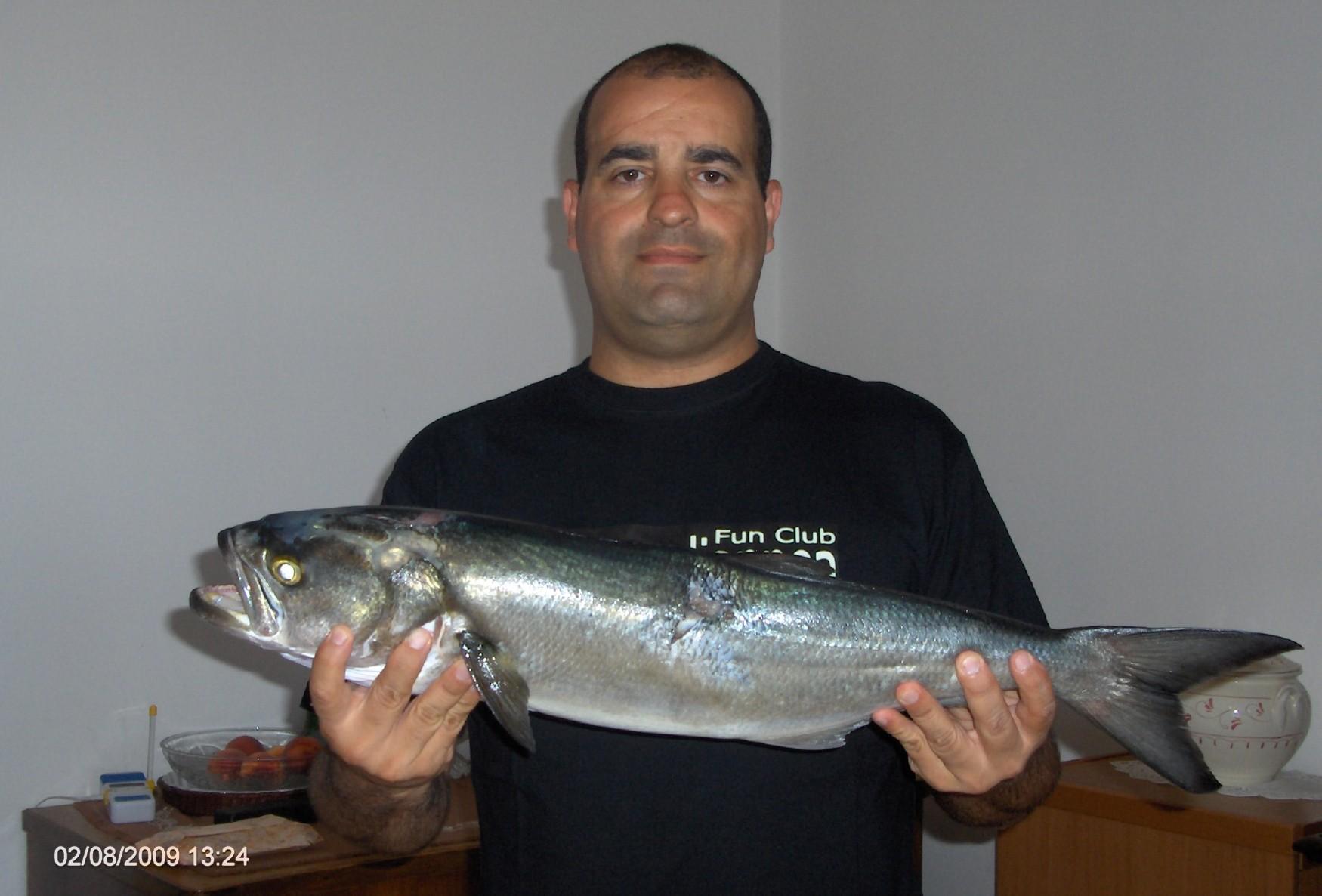 Pesca in apnea schede sui pesci il pesce serra - Come cucinare il pesce serra ...