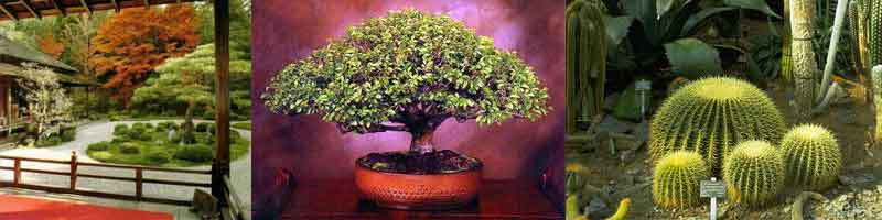 Giardini giapponesi e bonsai for Giardini giapponesi