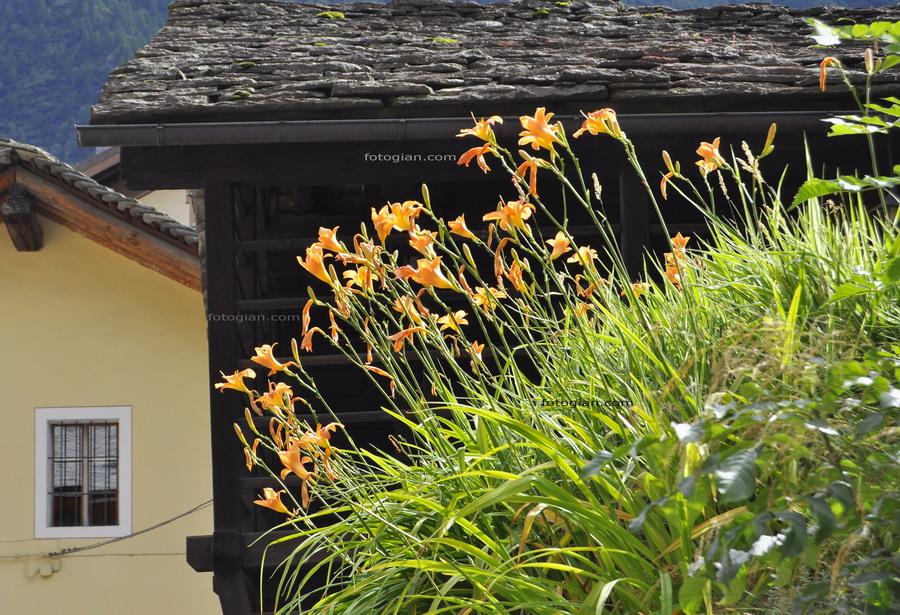 alagna fiori