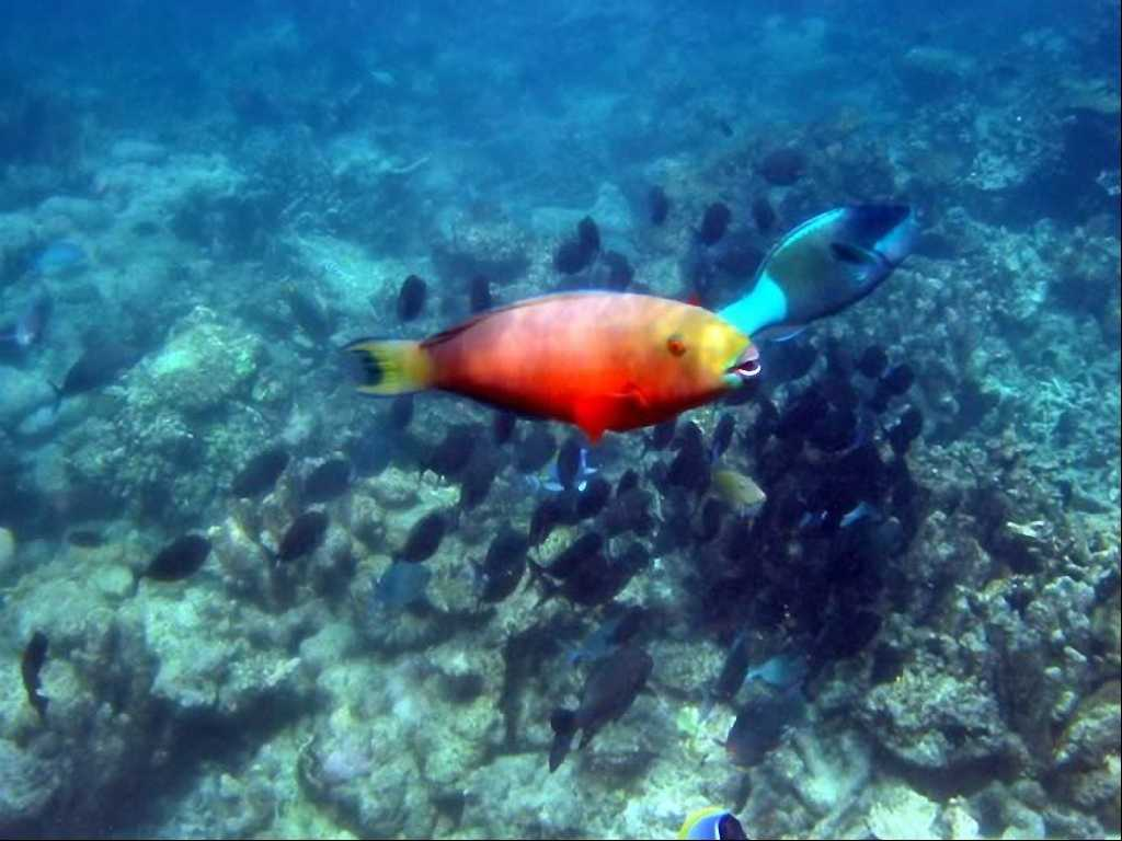 Sfondi marini for Sfondi animati pesci