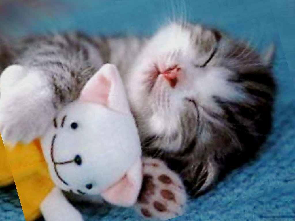 Foto sfondi: gatti 1 |
