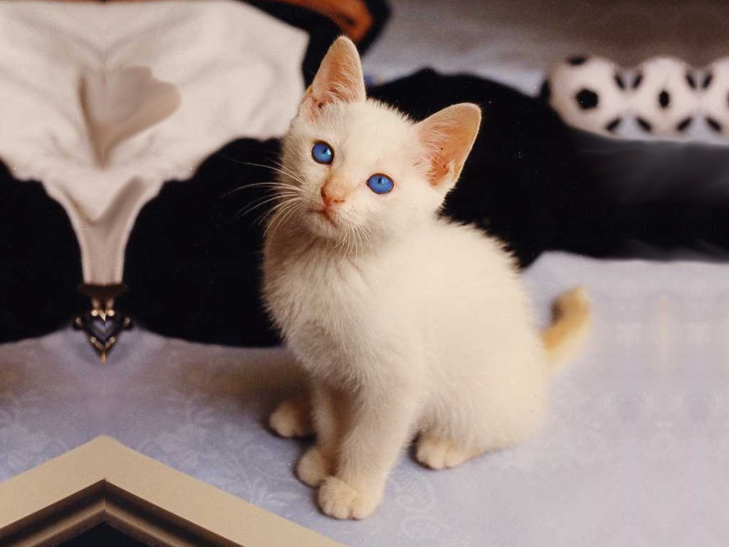 Pin sfondi e foto eugenia diordiychuk on pinterest for Sfondi gatti gratis
