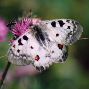 Segnali dal fantastico mondo delle farfalle articoli - Colorazione dei bruchi ...