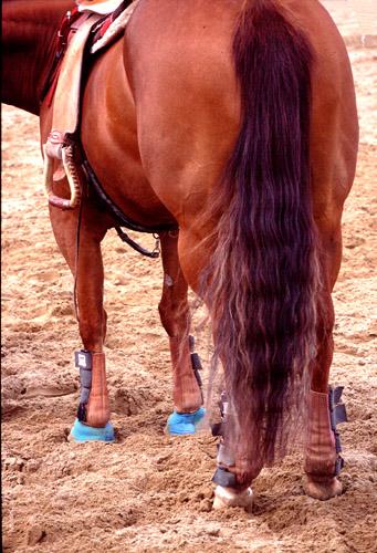 Horses Horse Photographs Fotografie Cavalli Horses