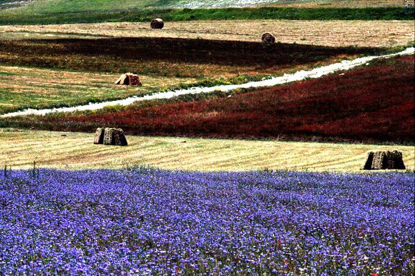 The sibillini hills i monti sibillini umbria marche - Calibrachoa perenne ...