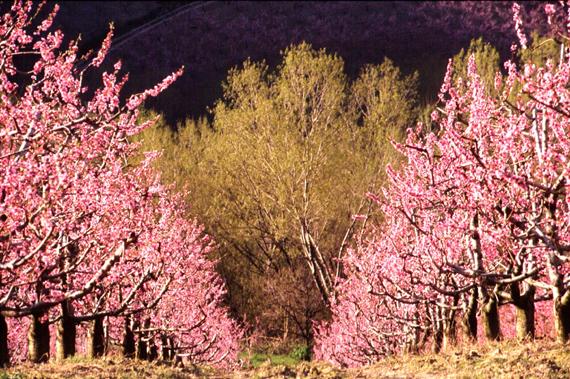 Tree Trees Plants Albero Alberi Foresta Forest