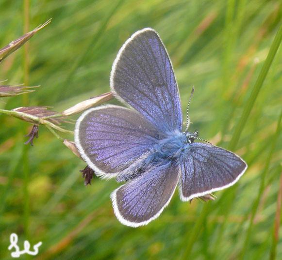 Leo foto farfalla