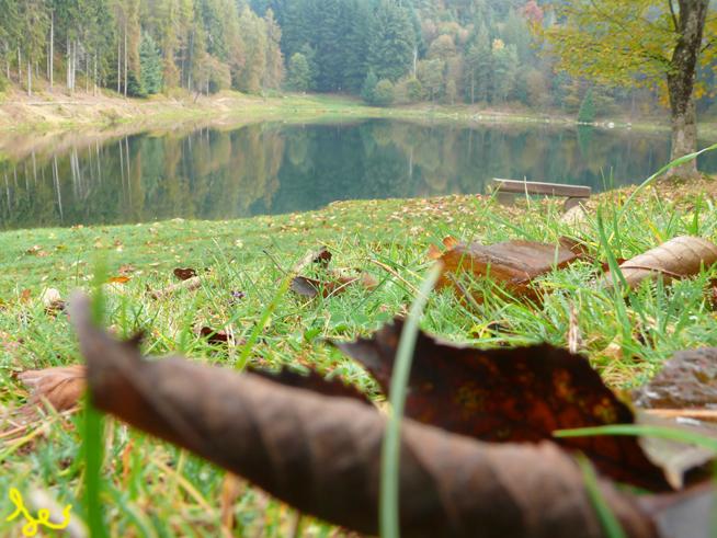 Disse un filo d'erba. Lago%20Foglie%20bas