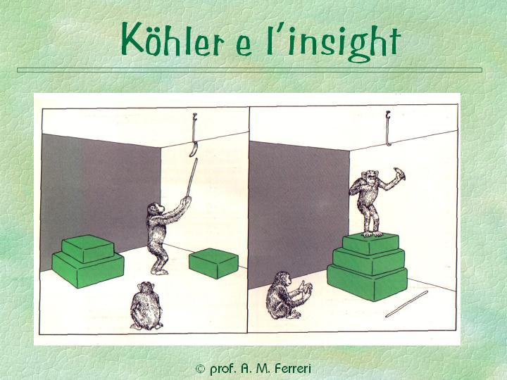 kohler insight