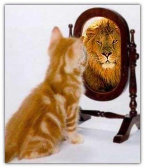 Quando siete davanti ad uno specchio che vedete su red rose - Scimmia che si guarda allo specchio ...