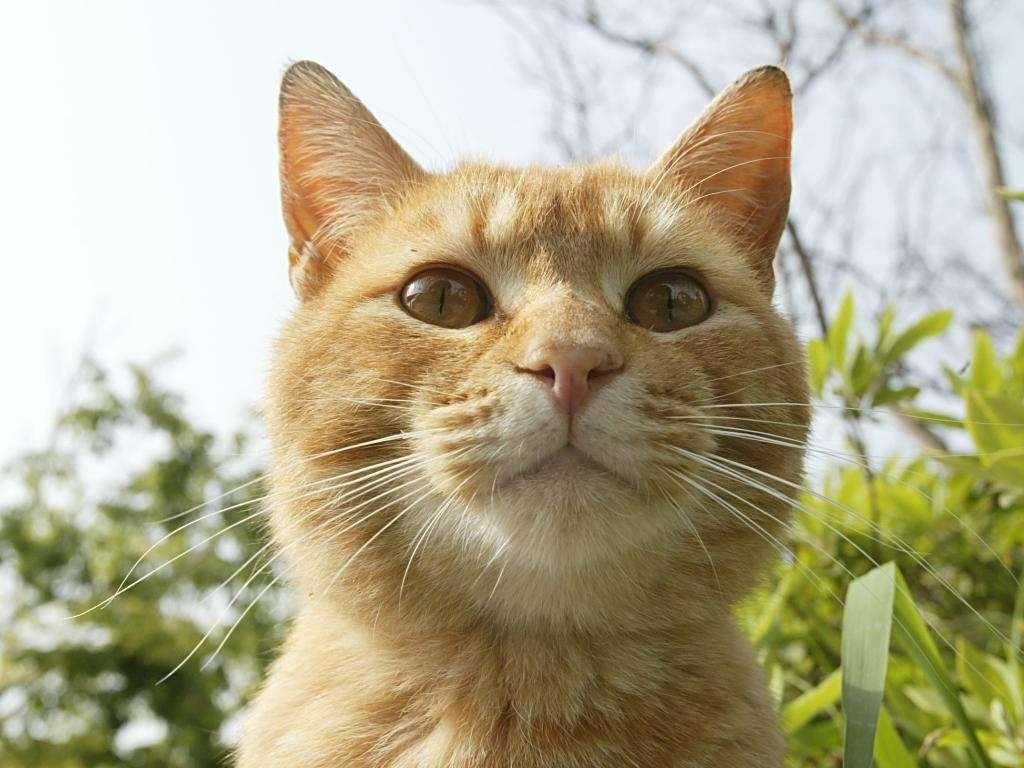 Raccolta di sfondi gratuiti per il tuo desktop gatti for Gatti sfondi desktop gratis