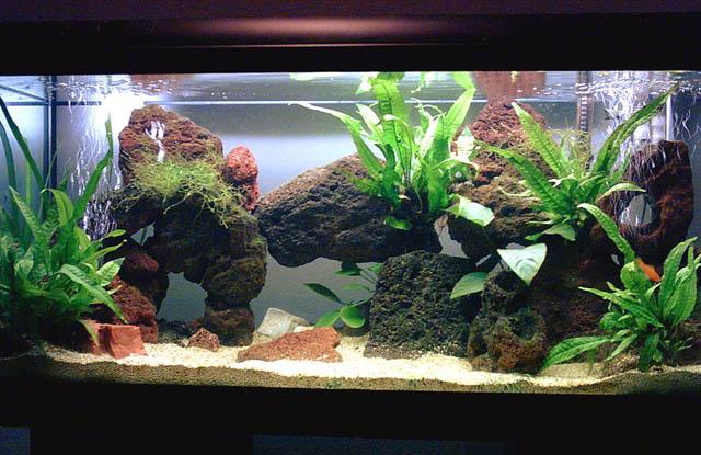 Foto dei miei acquari e del mio biotopo acquariforum for Ciclidi africani
