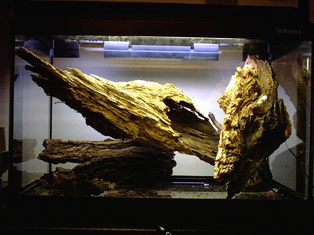 Foto dei miei acquari e del mio biotopo acquariforum for Legni per acquario