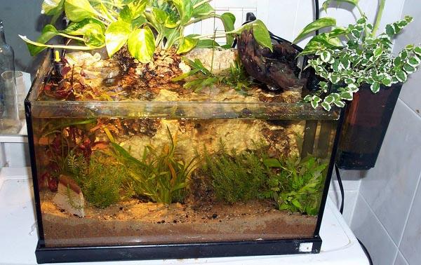 Le piante semiemerse acquariforum for Acquario aperto