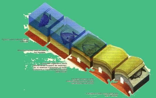 Metodi di datazione per fossili