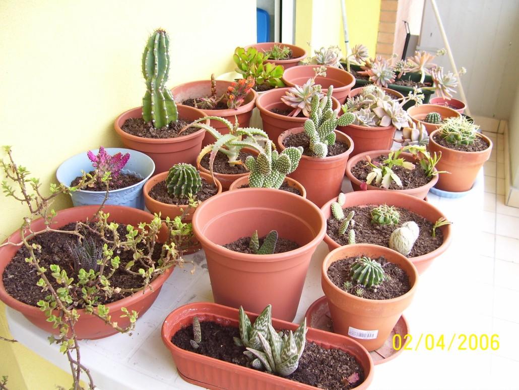Generalit piante grasse for Tutte le piante grasse