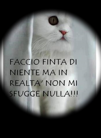 http://digilander.libero.it/unblogpercaso/gatto%20gatto...jpg