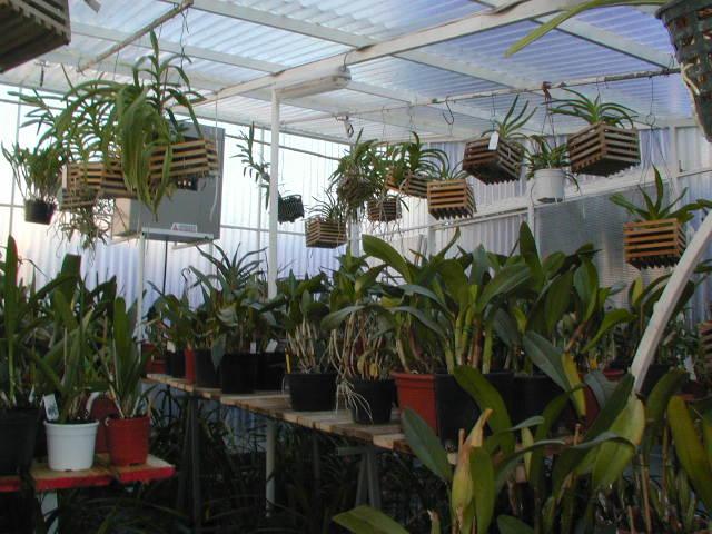 Orchidee passione for Dove posso trovare i progetti per la mia casa