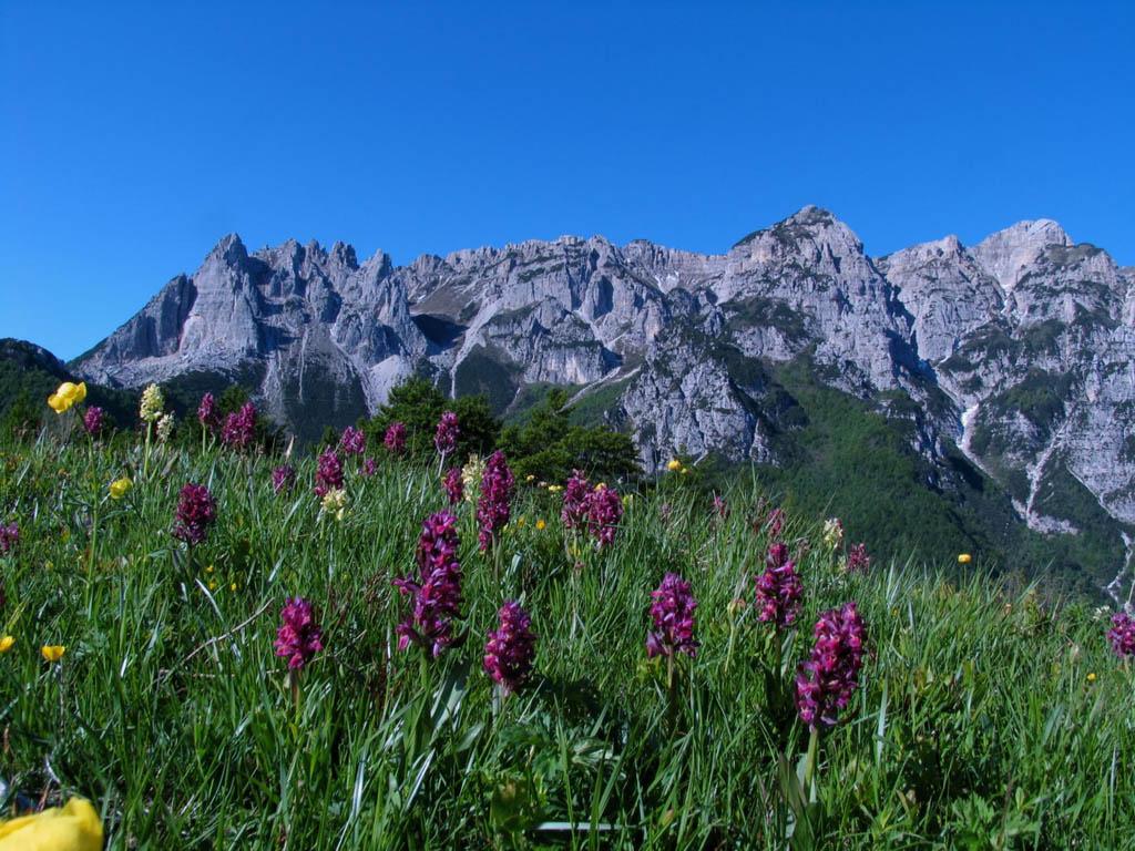 Vallarsa una piccola valle fra i monti del trentino for Monti del trentino
