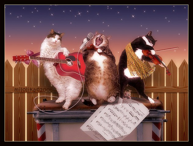 Musica sui gatti