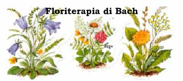 YOGA ROMA MONTESACRO Floriterapia